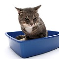 cat litterbox urinary tract