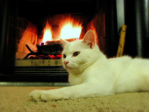 Five Pre Winter Cat Care Tips