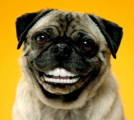 how to keep dogs teeth clean naturally