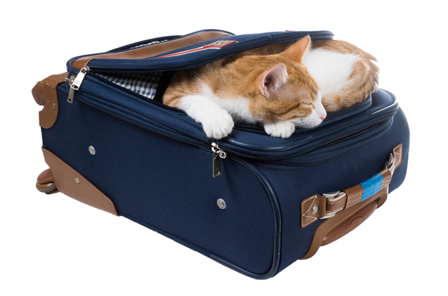 Cat inside the luggage
