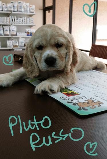 Pluto Russo