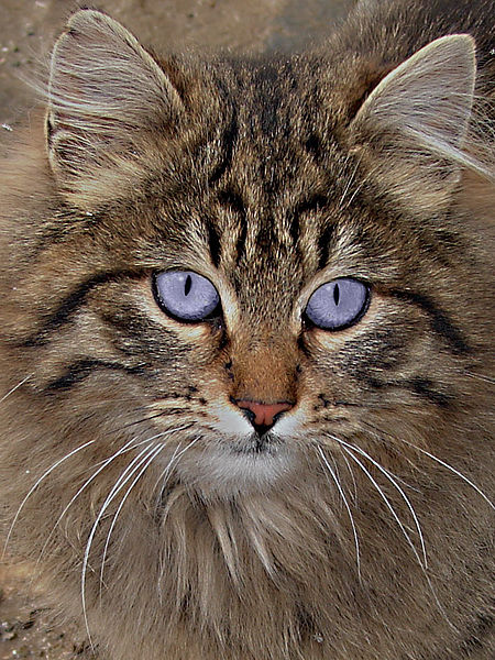 Who could ever resist not loving this cat's eyes?