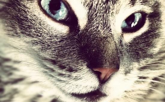 cat-kitten-pet-3415-550x550