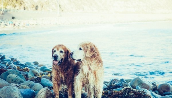 lake-animals-dogs-pets-large