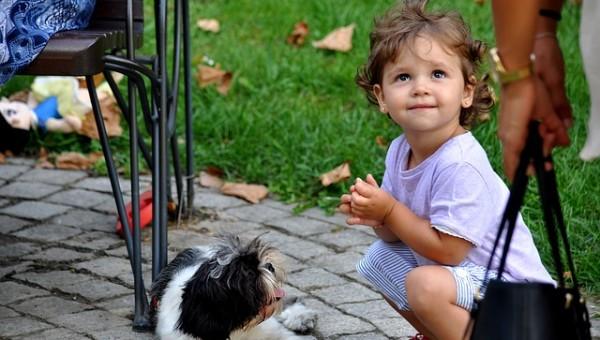 puppy-612064_640