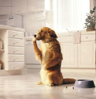 dog sitting on back legs in kitchen with one paw to his mouth and the other to his stomach